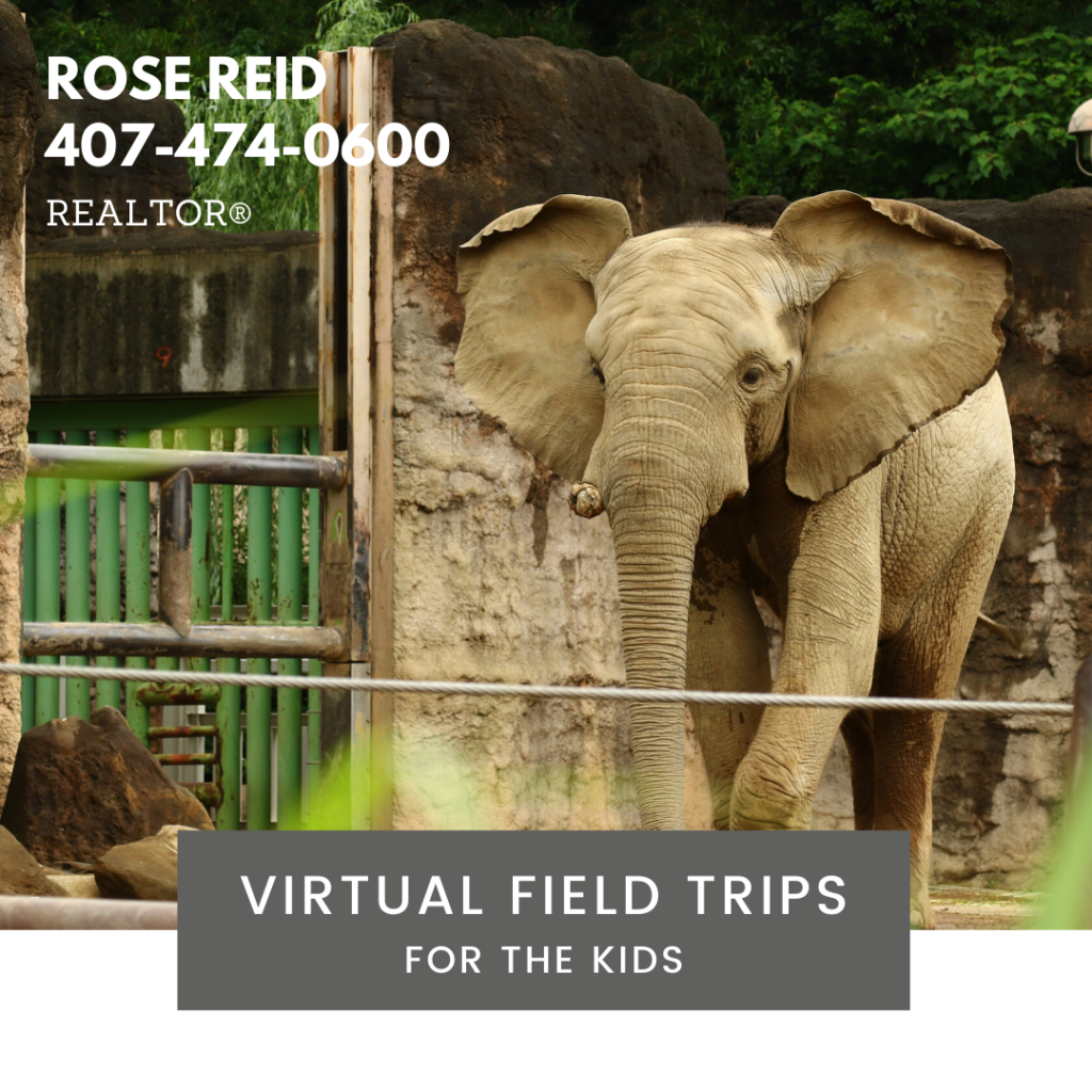 Virtual Field Trips – Animals